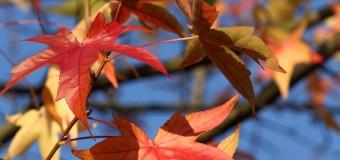 שם היצירה: הסתיו מתוך ארבע עונות, המלחין: אנטוניו לוצ'ו ויואלדי